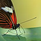 Butterfly Resting For A Moment-  by JessPeterson