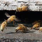 Bee's Knees by SuddenJim