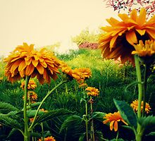Yellow Flowers in Bloom by mikebone