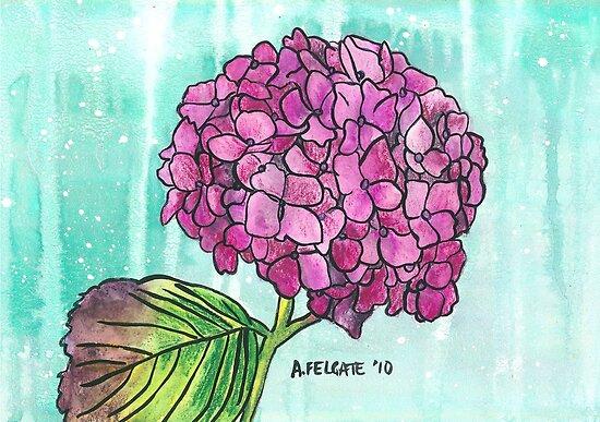 Hydrangea by Alexandra Felgate
