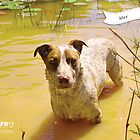 Max :: by Wet Nose Fotos by BFRQLD