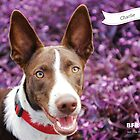 Charlie :: by Wet Nose Fotos by BFRQLD