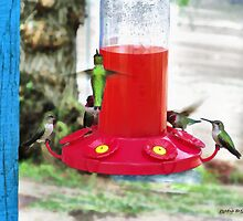Hummingbird Haven by Rhonda Strickland