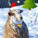 Hey! -  I Wanna Be Santa This Year! - Sheep - NZ by AndreaEL