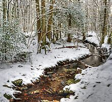 The Winter Stream -One Year On by Jamie  Green