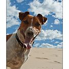 Hamilton Jack Russel Bolton by JustineEB