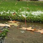 First snow, November by cindyh