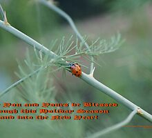 Holiday Blessings; Ladybug on asapragus - La Mirada, CA USA by leih2008