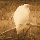 Egret In A Tree by DottieDees