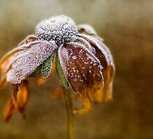 Sugar frosted by Mandy Disher