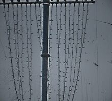 11 birds on a wire by BabyM2