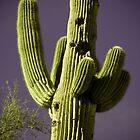 Hotel Arizona by Peter Maeck