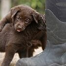 Pup &amp; Boots by Bill Maynard