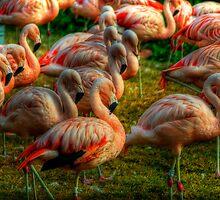 Pink Flamingos  by Saija  Lehtonen