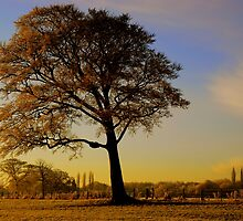 """""""THE LEANING TREE"""" by snapitnc"""