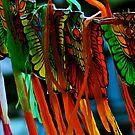Summer Kites by Kornrawiee