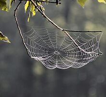 Tennessee Spider Web by SuddenJim