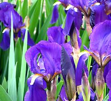 Lovely purples by Maria1606