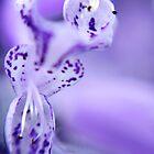 Purple Dragon by Jessica Dzupina