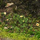Tiny Paddock of Fungus at Delly's Dell by Michael Barnett