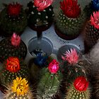 Flowering Cacti by Deb Gibbons