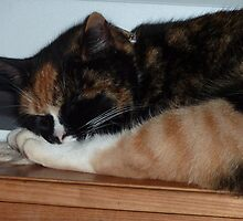 Who's leg is that? - Tortoise shell cat. by RainbowWomanTas