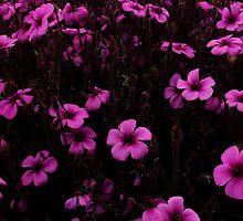 Purple & Purple, Golden Gate Park- SFO by David Mellor