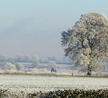 Cotswolds Winter Wonderland by janrique