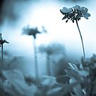 Dream...: Got Explore Dec. 2011, On 11 Featured Works, Top Ten Voted by Kornrawiee
