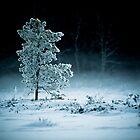 Tree II by trbrg