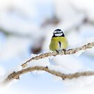 Snowy Perch by Sarah-fiona Helme