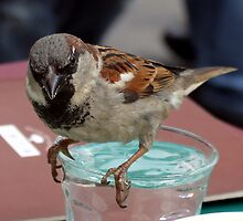 My Name is Sparrow Einstein, Mr. Sparrow Einstein! or Don´t drink and fly! by Ronny Falkenstein