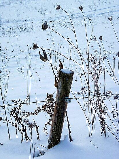 Fencepost & Weeds by teresa731
