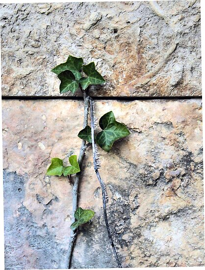 Ivy Climbing by SuddenJim