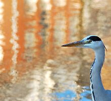 The city heron by jchanders