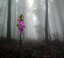 Foxglove by Toni Holopainen