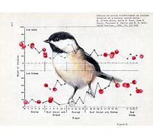 Chickadee and Berries Photographic Print