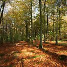 Friston Forest, East Sussex by DJ-Stotty