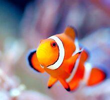 Nemo by Lynchbox