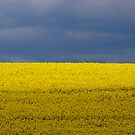 Blue Yellow Sky Field by Christopher Cullen
