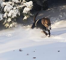 Dashing through the Snow by Karen  Rubeiz