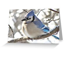 Icy Blue Morning (Blue Jay) Greeting Card