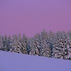 A Winter Afternoon by AmyKippernes