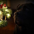Bella Merry Christmas by jeanlphotos
