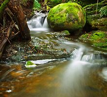 Myrtle Gully Rivulet, Tasmania #4 by Chris Cobern
