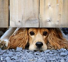Can I come? by Alain Turgeon