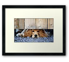 Can I come? Framed Print