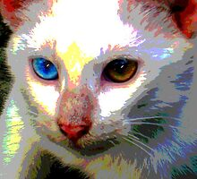 My blue-eyed kitty by Angelo Aguinaldo