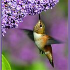 LITTLE HUMMINGBIRD...My first feature in 2013 by RoseMarie747