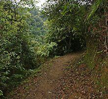 Tai Mo Shan Country Park by Rosie Appleton